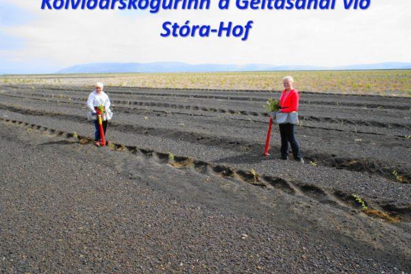 Kolvidur_Kolvidarskogur_Geitarsandur_Stora-Hof